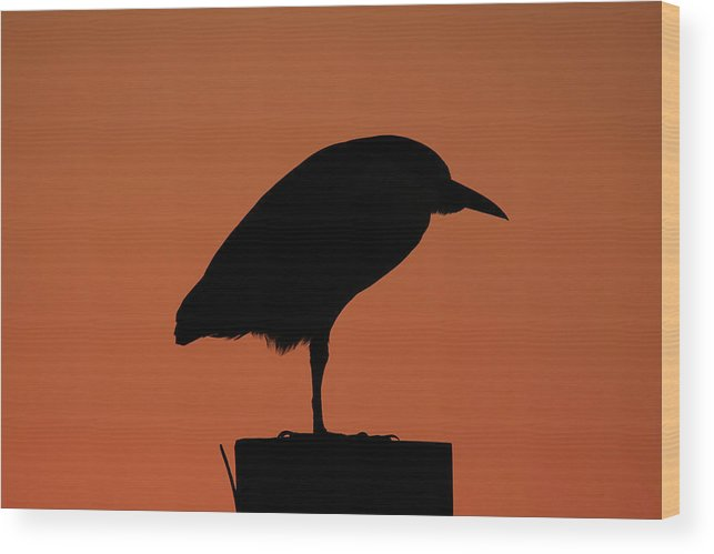 Silhouette Wood Print featuring the photograph Evening Chill by Burge Darwin