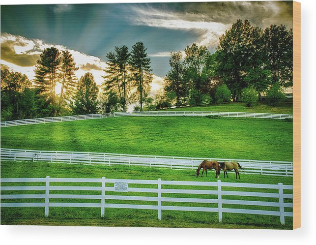 Tennessee Wood Print featuring the photograph Evening Graze In Tennessee by Mountain Dreams