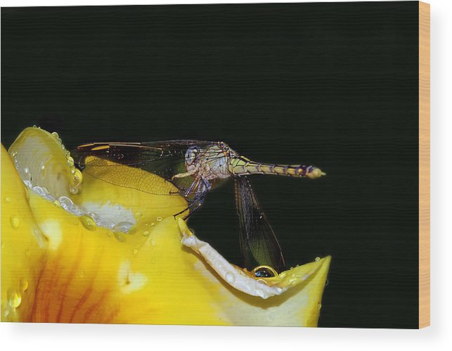 Dragonfly Wood Print featuring the digital art Evening Sip by Lesley Smitheringale