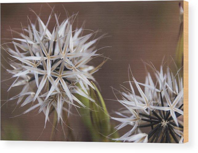 Wildflower Wood Print featuring the photograph Fairy Flower by Laura Pratt