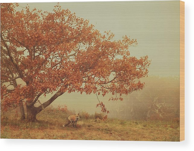 Fall Wood Print featuring the photograph Fall Fox by Carrie Ann Grippo-Pike