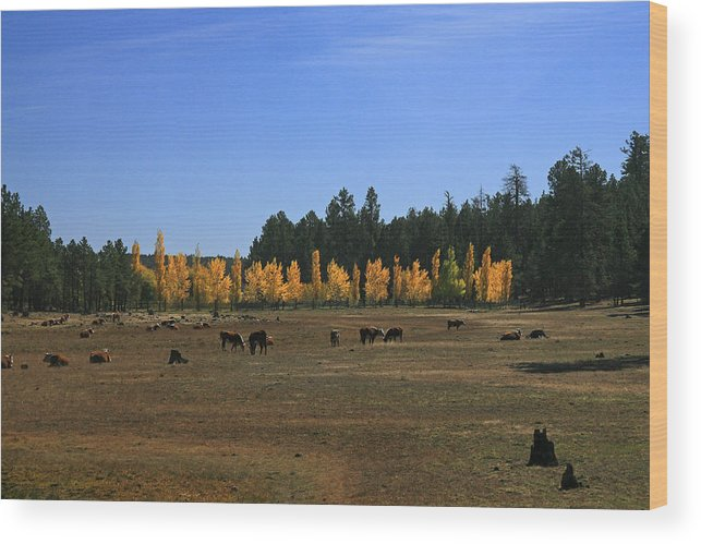 Landscape Wood Print featuring the photograph Fall In Line by Randy Oberg