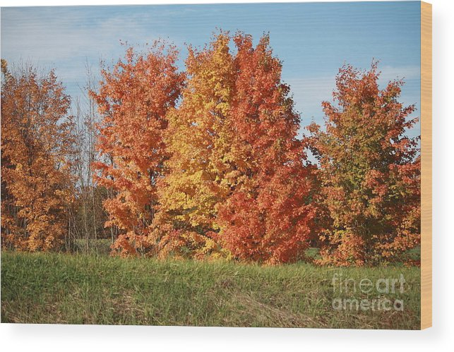 Together As One. Wood Print featuring the photograph Fall by Jennifer Francisco