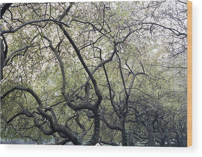 Trees Wood Print featuring the photograph Fall Trees by Wes Shinn