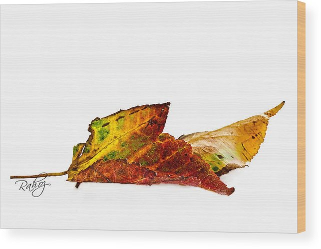 Autumn Wood Print featuring the photograph Fallen In Fall by Rahat Iram