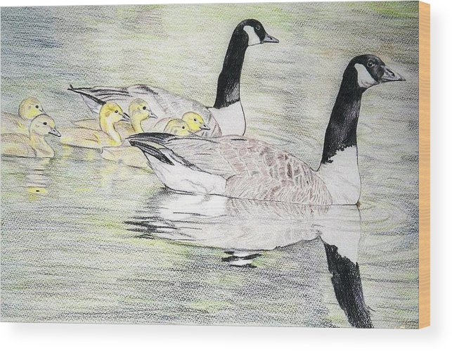 Canadian Geese Wood Print featuring the drawing Family Outing by Debra Sandstrom