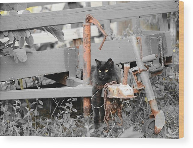 Wagon Wood Print featuring the photograph Farm Kitty Hanging Out by Lynda Dawson-Youngclaus
