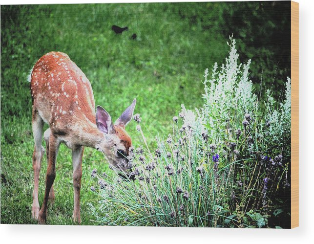 Fawn Wood Print featuring the photograph Fawn Visits Flowers by Karen Majkrzak