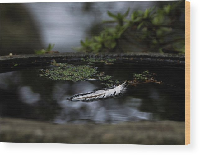 Pond Wood Print featuring the photograph Floating On A Still Pond by Marilyn Wilson