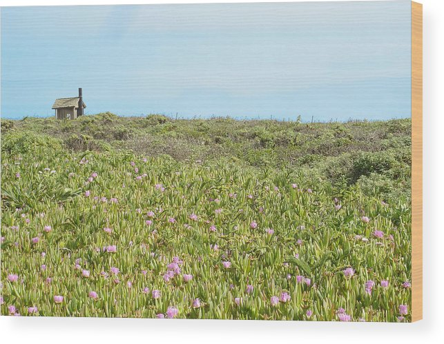 House Wood Print featuring the photograph Field Of Flowers by Michael Simeone
