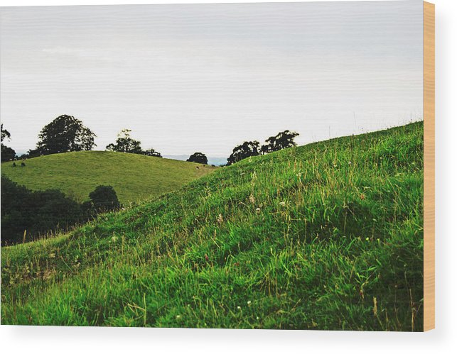 Fields Wood Print featuring the photograph Fields In Glastonbury by Tinto Designs