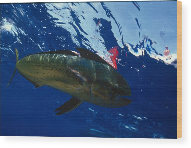 Ocean Wood Print featuring the photograph Fish by Jim Derks