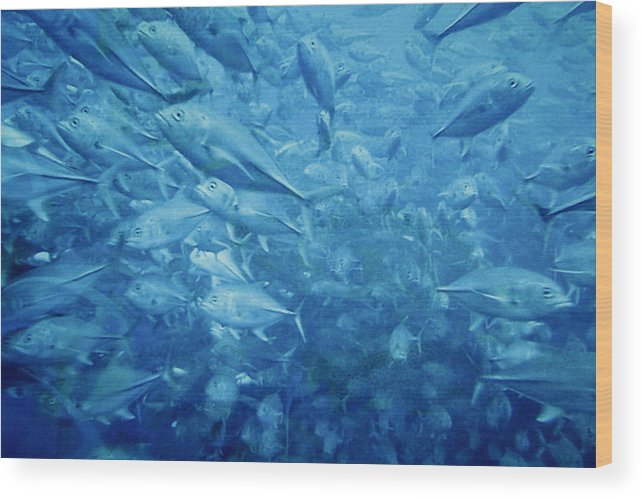 Fish Wood Print featuring the photograph Fish Schooling Harmonious Patterns Throughout The Sea by Christine Till
