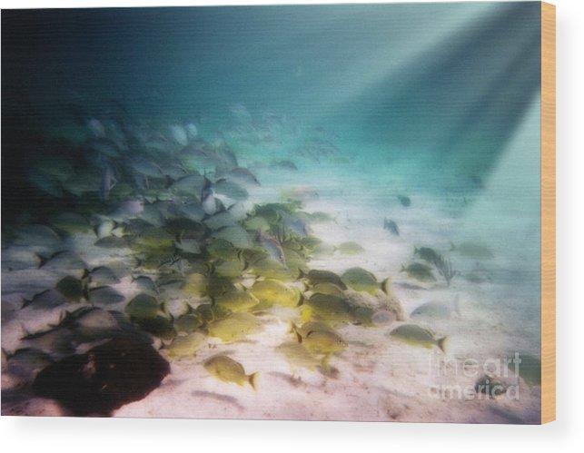 Fish School Wood Print featuring the digital art Fish Swim In The Light by Sven Brogren