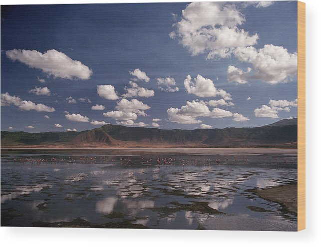 Ngorongoro Crater Wood Print featuring the photograph Flamingos by Marcus Best