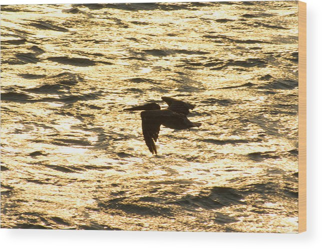 Bird Wood Print featuring the photograph Flight Of The Pelican by Andreas Freund