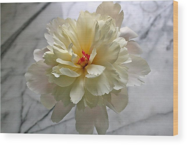 Peony Wood Print featuring the photograph Floating Peony by Melany Raubolt