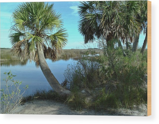 Color Photograph Wood Print featuring the photograph Florida Shade Trees by Wayne Denmark