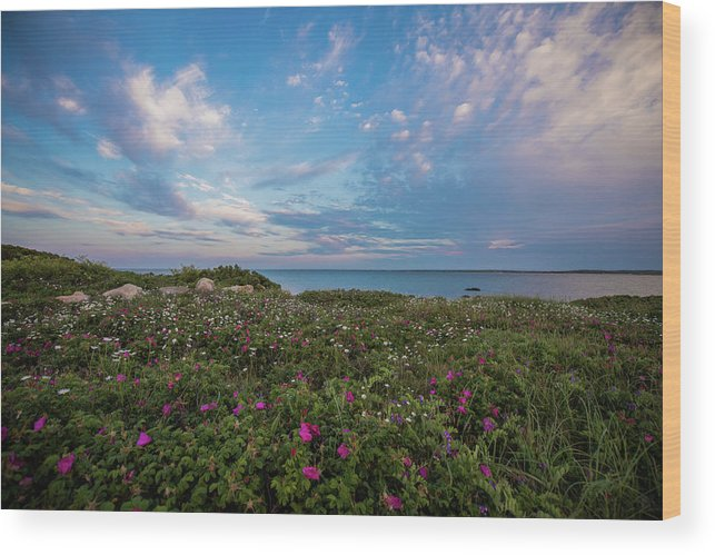 Flowers Wood Print featuring the photograph Flower Patch by Mark Majndle
