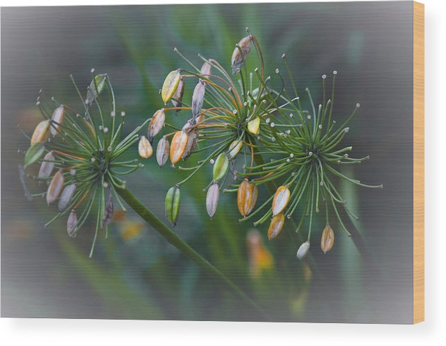 Scotland Wood Print featuring the photograph Flower Spray by John McKinlay