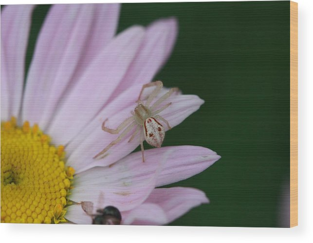 Flower Wood Print featuring the photograph Flower Trap by Paul Slebodnick