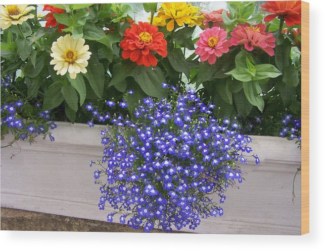 Flowers Wood Print featuring the photograph Flowers Of Blue by Chuck Shafer