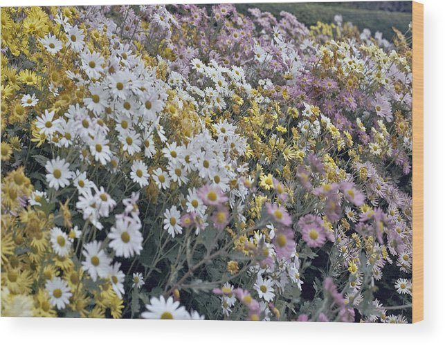 Flowers In Fall Wood Print featuring the photograph Flowers by Wes Shinn