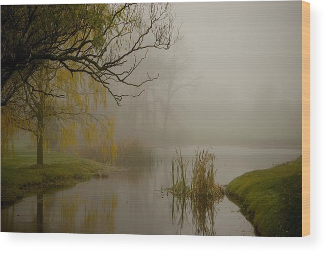 Foggy Wood Print featuring the photograph Foggy Wetland by Jack Foley