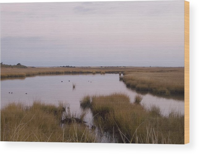 Nantucket Wood Print featuring the photograph Folgers Marsh Nantucket by Henry Krauzyk