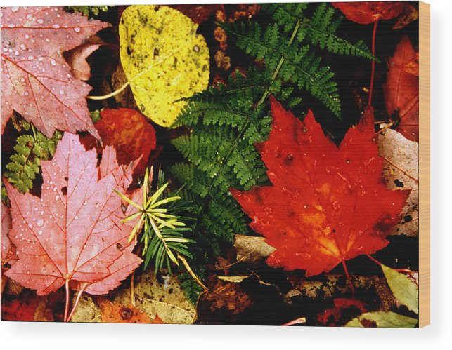 Foliage Wood Print featuring the photograph Foliage Closeup by Roger Soule