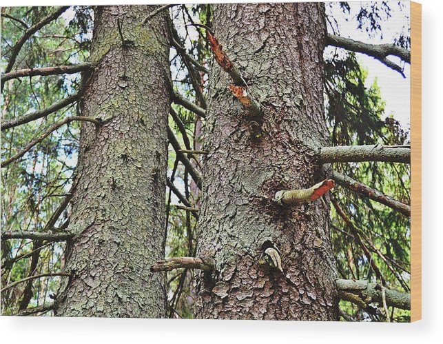 Forest Wood Print featuring the photograph Forest Corrosion Bark by Tinto Designs