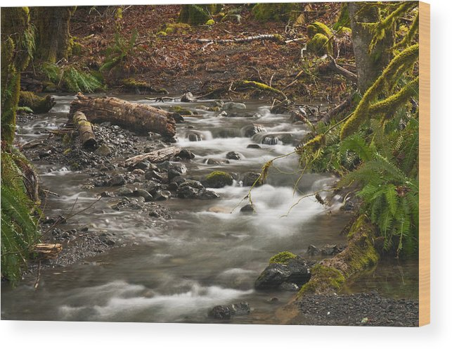 River Wood Print featuring the photograph Forest Creek by Chad Davis