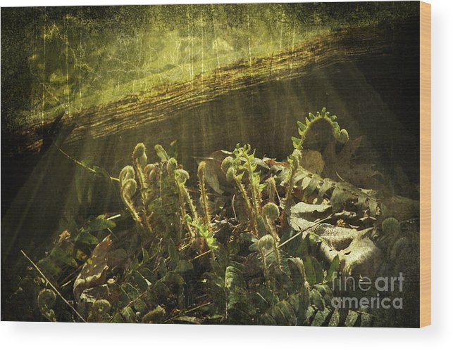 Ferns Wood Print featuring the photograph Forest Ferns Unfurling by Sari Sauls
