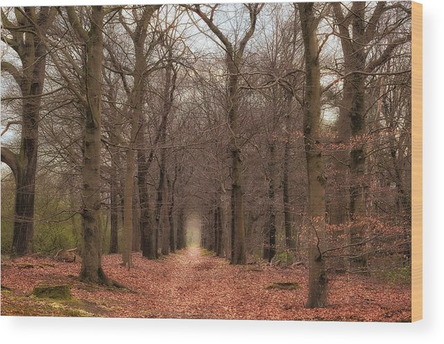 Netherlands Wood Print featuring the photograph Forest Lane Near Maarsbergen by Tim Abeln