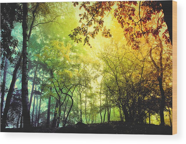 Digital Wood Print featuring the photograph Forest Light by BaxiaArt