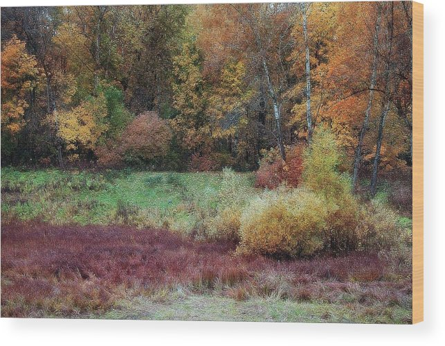 Margarita Buslaeva Wood Print featuring the photograph Forest Magic by Margarita Buslaeva