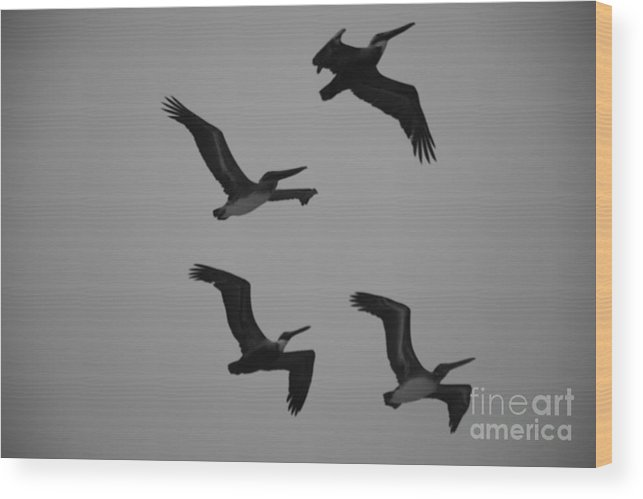 Pelicans Wood Print featuring the photograph Formation Drills by Davis FlowerPower