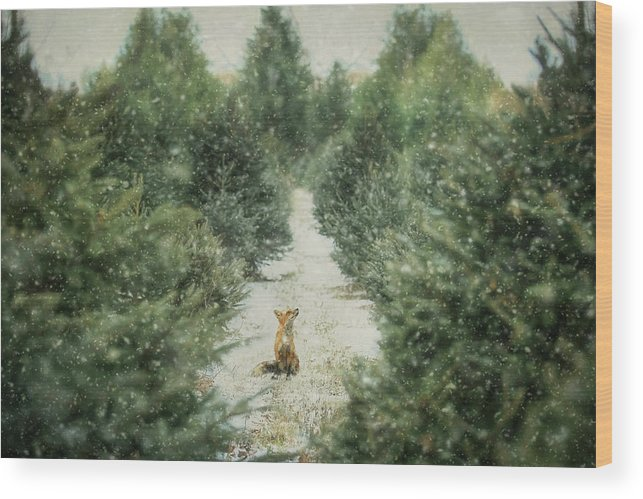 Fox Wood Print featuring the photograph Fox In The Flurries by Carrie Ann Grippo-Pike