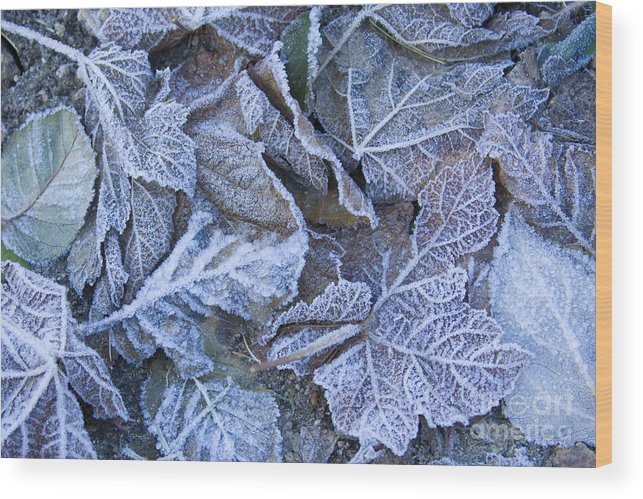Frost Wood Print featuring the photograph Frost by Idaho Scenic Images Linda Lantzy