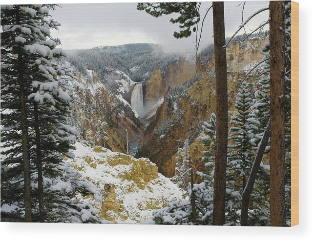 Yellowstone Wood Print featuring the photograph Frosted Canyon by Steve Stuller