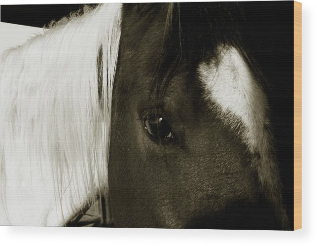 Horse Wood Print featuring the photograph Gaze by Toni Hopper