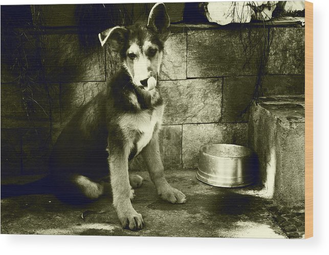 German Sheppard Puppy Wood Print featuring the photograph German Shepard Puppy by Emily Kemp