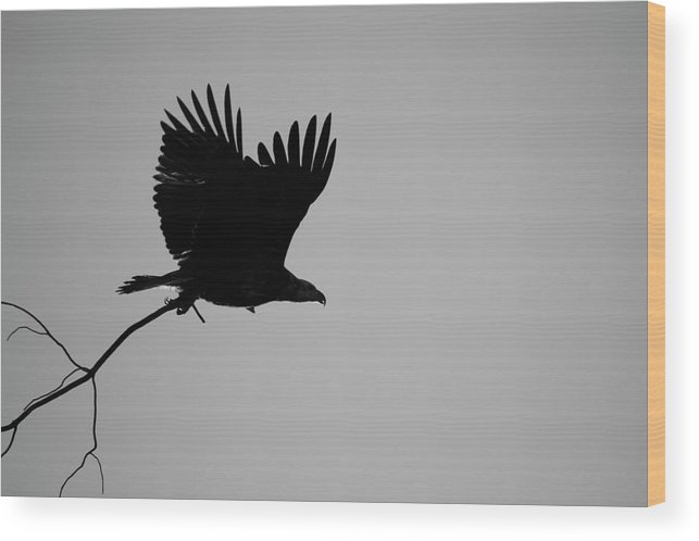 Eagle Wood Print featuring the photograph Getting Ready by Diana Hatcher