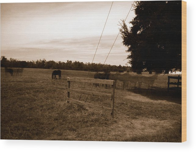 Horses Wood Print featuring the photograph Ghost Horses Of Huckleberry Lane by Heather S Huston