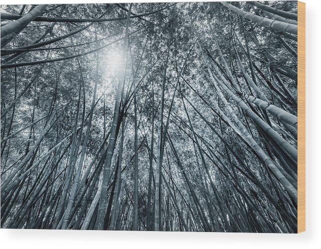 Black And White Wood Print featuring the photograph Giant Bamboo In Forest With Sunflare, Black And White by Ruurd Dankloff