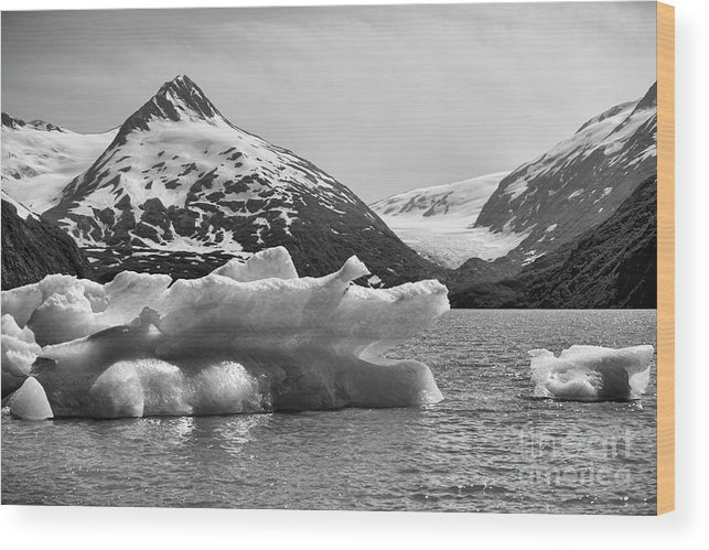 Alaska Wood Print featuring the photograph Glacier Bw Porter Alaska by Chuck Kuhn