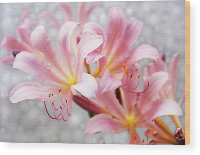 Lily Wood Print featuring the photograph Glowing Surprise Lily by Jim Darnall