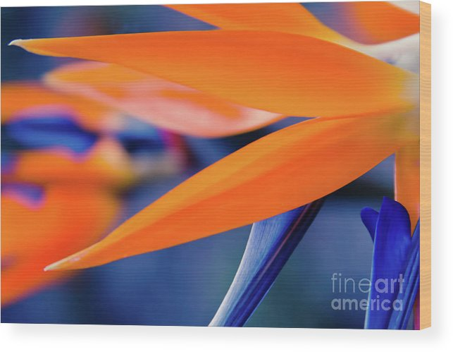 Bird Of Paradise Wood Print featuring the photograph Gods Garden by Sharon Mau