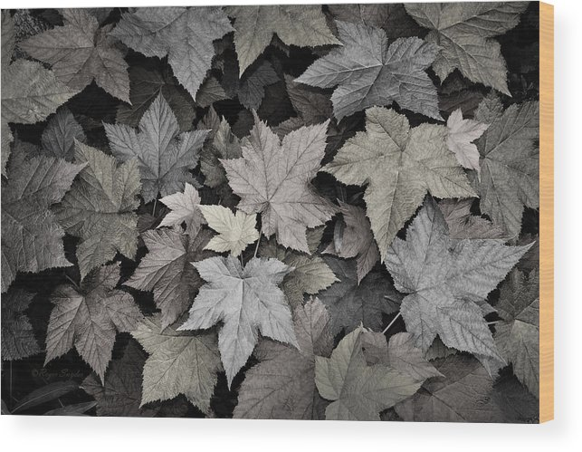 Beautiful Photos Wood Print featuring the photograph Gold Copper And Silver Leaves 1 by Roger Snyder