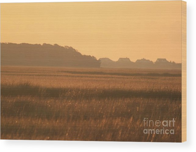 Marsh Wood Print featuring the photograph Golden Marshes by Nadine Rippelmeyer